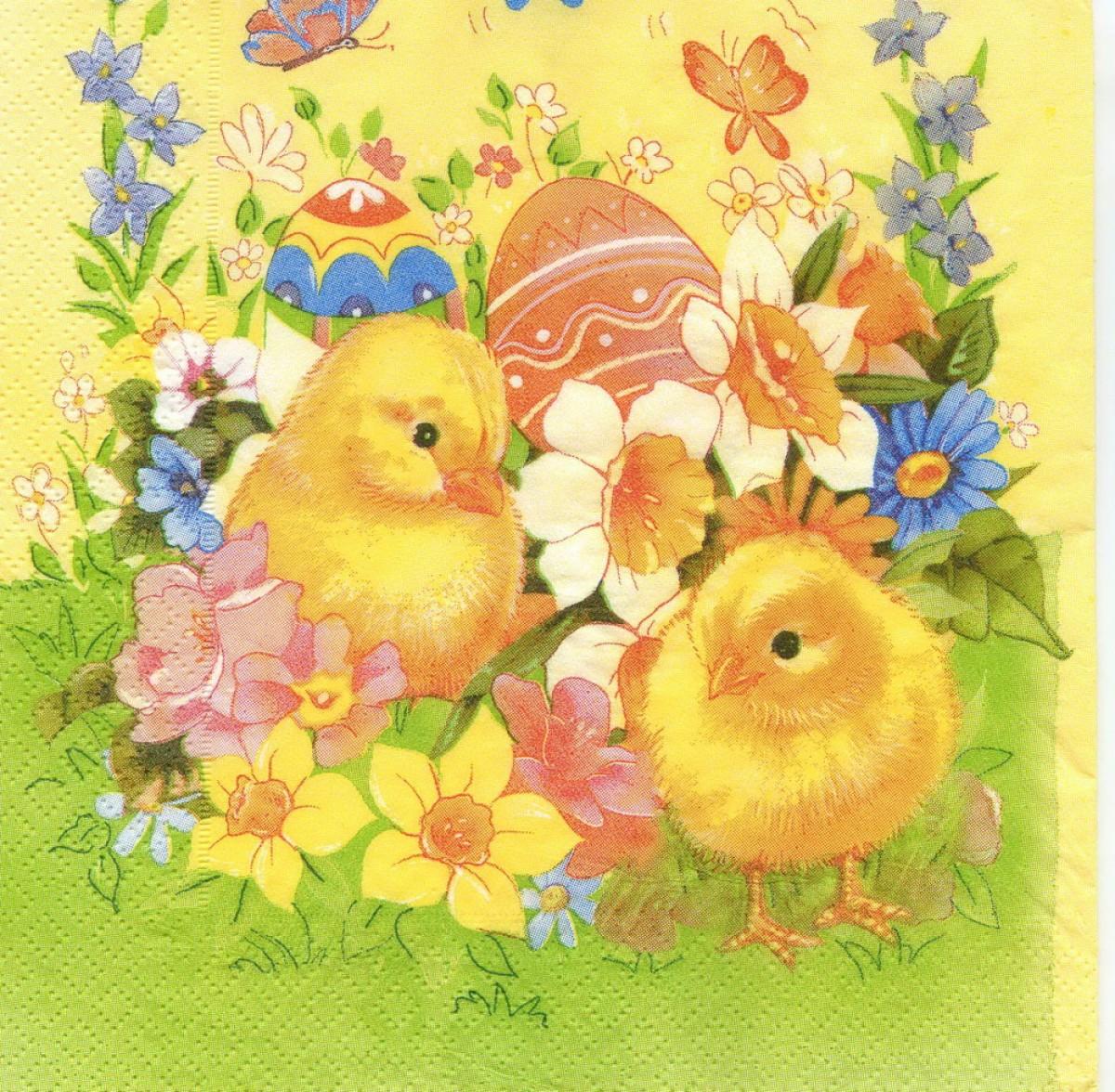сегодняшний цыплята открытки кожа